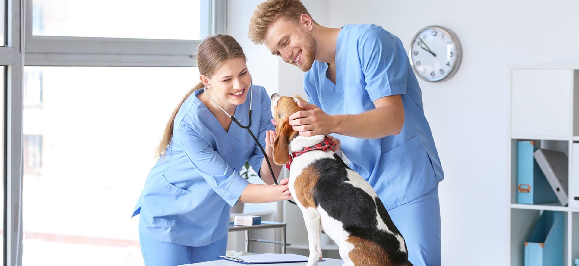 GES118 Veterinary Assistant 1400x700 aspect ratio 100 46